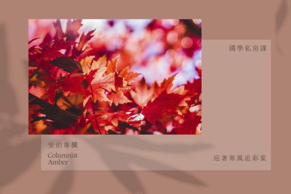 國學私房課|迎著寒風追彩葉