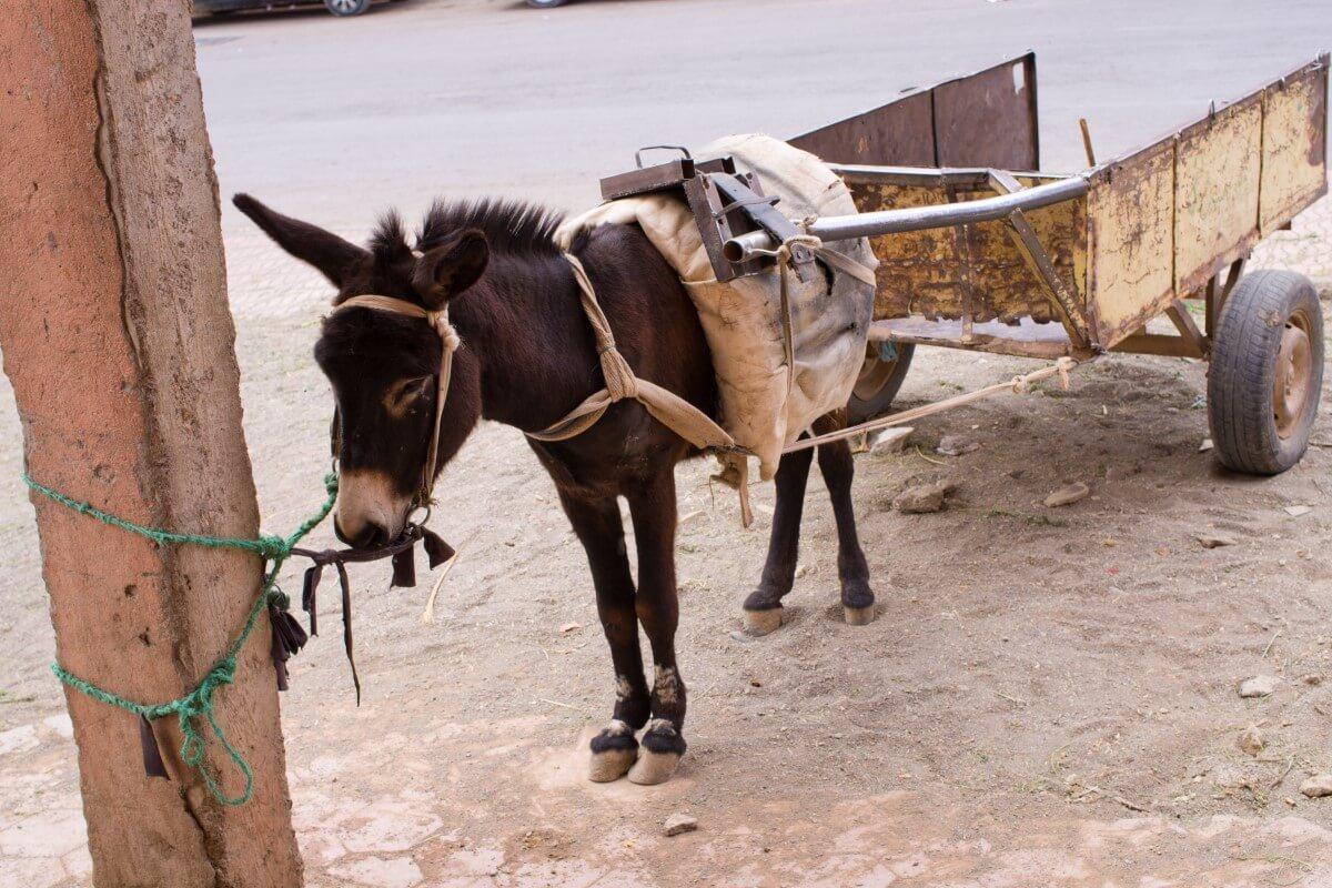 小驢子拉車示意圖,僅情境示意,非當事畫面。